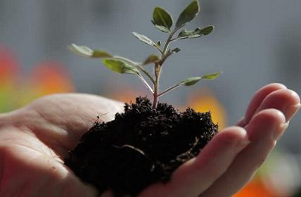 plant on hand