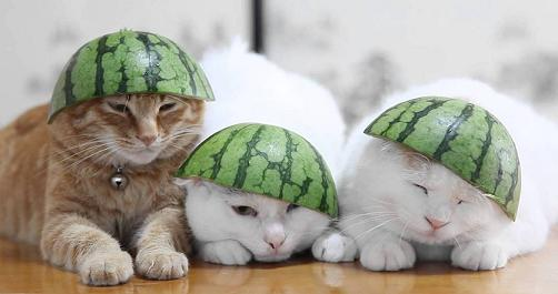 cats with watermelon hats.jpg