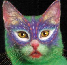colorful-cat