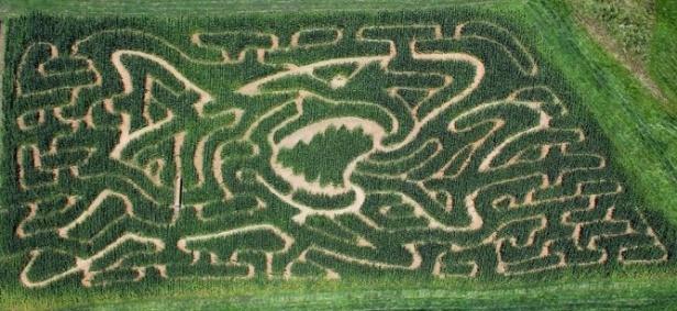 corn maze-2.jpg