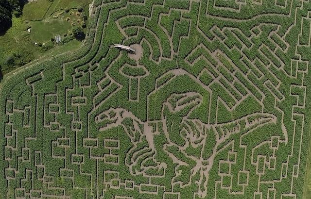 corn maze-3