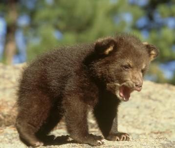 cute bear.jpg