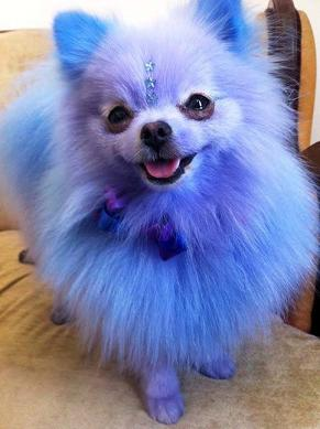 cute blue puppy-3.jpg