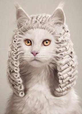 cute-cat-judge