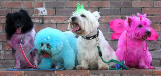 cute doggies-7.jpg