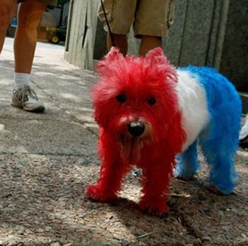 cute french puppy-8.jpg