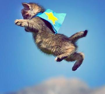 cute-kitten-jumping