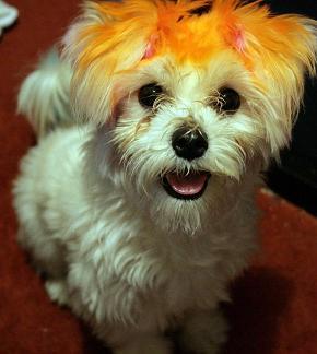 cute puppy-2.jpg