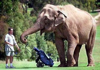 elephant-playing-golf