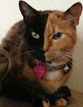 funny-cat-1