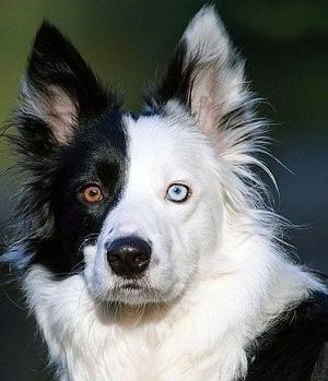 funny-dog-with-black-eye