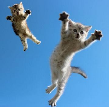 funny-kittens-jumping