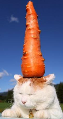 giant carrot on cat's head.jpg