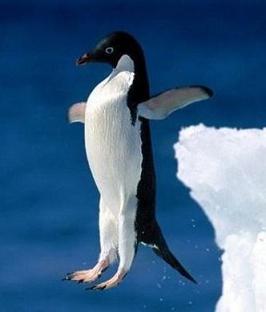 penguin-jumping