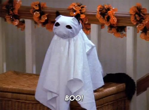 cat halloween ghost.jpg