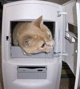 cat-in-the-computer