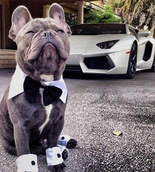 cute bulldog.jpg