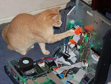 cute-cat-with-computer