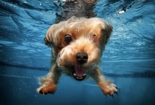 cute doggie swimming.jpg