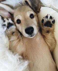 cute-puppy-1