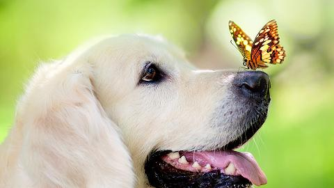 dog-and-butterfly