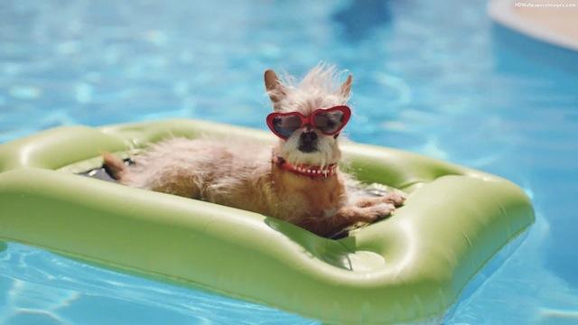 dog-in-swimming-pool