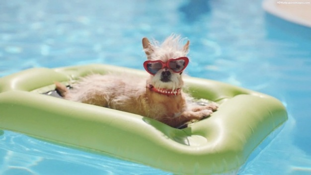 dog-in-swimming-pool