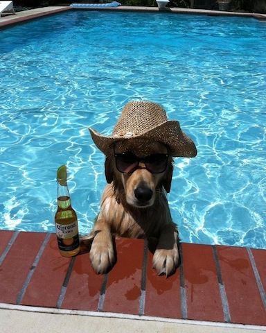 dog-in-the-pool