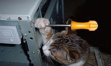 funny-kitty