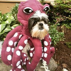 octopus-doggie