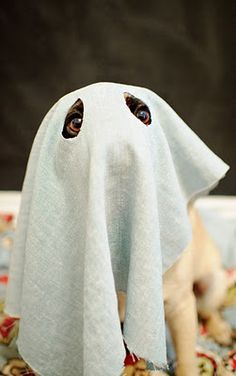 Joke Of The Day Ghost Encounter New Bloggy Cat Nbc
