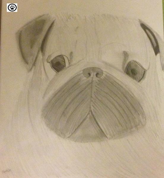 pug-portrait
