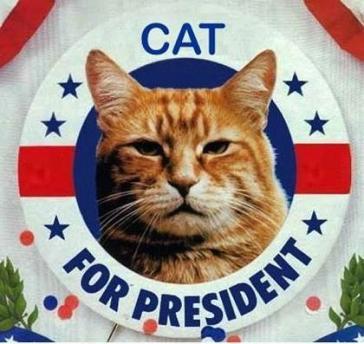 cat-president