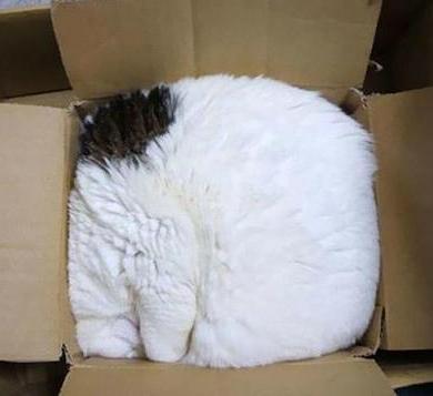 cat-sleeping-in-a-box