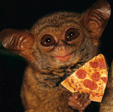 cute-animal-with-pizza