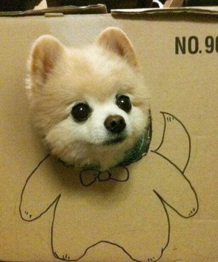 cute-dog-in-box