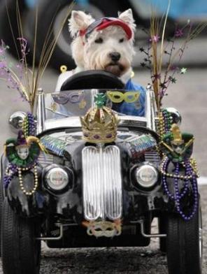 cute-doggie-driving