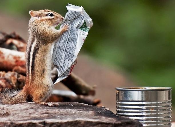 cute-squirrel-reading-label