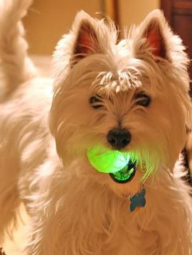 dog-with-glow-ball