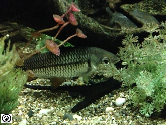fish-in-an-aquarium