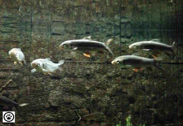 fishes-in-an-aquarium-2