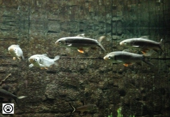 fishes-in-an-aquarium-2