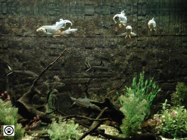 fishes-in-an-aquarium-3