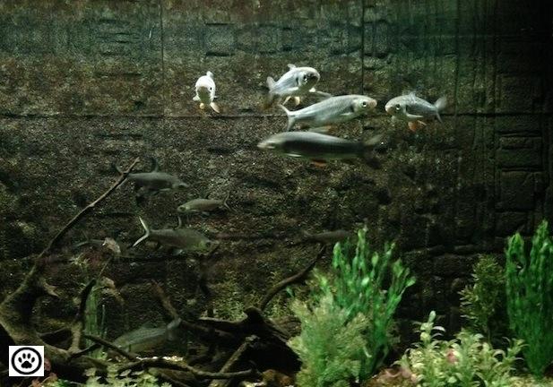 fishes-in-an-aquarium