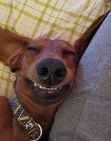 funny-dog-sleeping