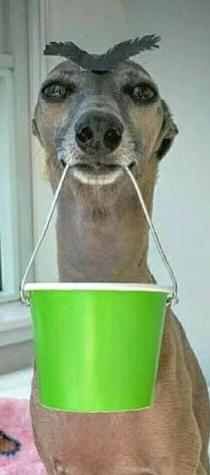 funny-dog-with-bucket
