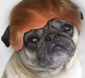 pug-president