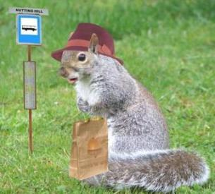 squirrel-at-busstop