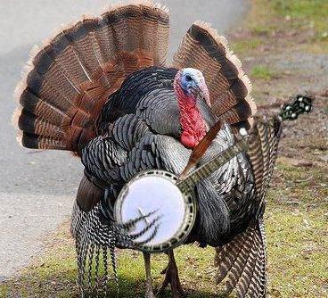 turkey-playing-banjo
