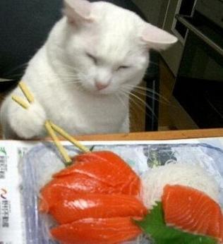 cat-eating-sushi